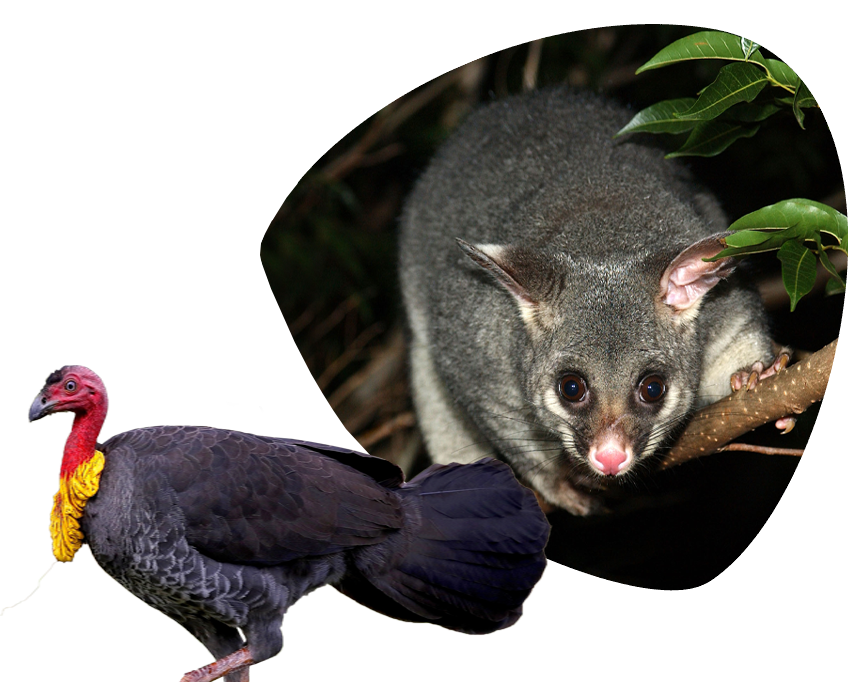 animals found in homes in queensland1